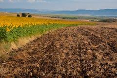 Zaorany pole blisko pola słoneczniki zdjęcia stock