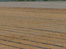 Zaorany pszeniczny pole obraz stock