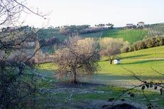 Zaorany ziemi pole w Marche wzgórzach podczas zmierzchu Fotografia Stock