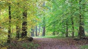 Zapętlający wideo, podejście jesień w pięknym lesie zdjęcie wideo