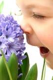 zapach wiosna Obrazy Stock