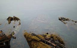 Zapadnięta drewniana łódź z algami i mech Zdjęcia Royalty Free