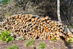 Zapas szalunek, siekający puszków drzewa przy lasem Zdjęcia Stock