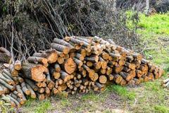 Zapas szalunek, siekający puszków drzewa przy lasem w lecie Zdjęcia Royalty Free