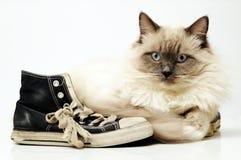 Zapatillas de deporte negras viejas de la lona con el gato de Ragdoll Foto de archivo libre de regalías