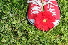 Zapatillas de deporte rojas con la flor del gerbera Imágenes de archivo libres de regalías