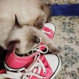 Zapatillas de deporte y gatitos Imagen de archivo