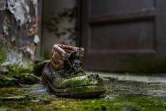 Zapato abandonado con el musgo Imagen de archivo libre de regalías