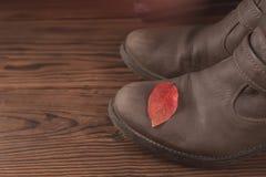 Zapato con la licencia de la caída, todavía del atumn vida Foto de archivo
