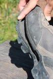 Zapato del senderismo roto después de uso intensivo Fotos de archivo libres de regalías