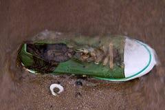 Zapato lavado sobre la playa imagen de archivo libre de regalías