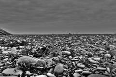Zapato perdido en la playa Imagen de archivo libre de regalías