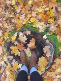 Zapatos de la caída Fotos de archivo libres de regalías