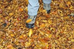 Zapatos de los caminantes en una alfombra de las hojas de otoño caidas fotografía de archivo