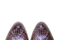 Zapatos de lujo de las mujeres Cuero auténtico de la serpiente Objeto de la moda foto de archivo