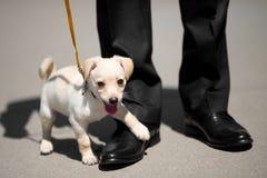 Zapatos del perrito y del hombre Fotos de archivo