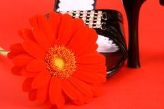 Zapatos del sexo Fotos de archivo libres de regalías