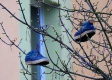 Zapatos en un árbol Imagen de archivo