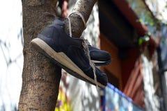 Zapatos viejos en un árbol Imágenes de archivo libres de regalías