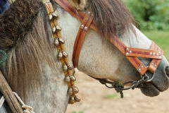 zapinający koń zapinać Obrazy Stock