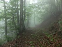 Zaproszenie w lesie obraz stock