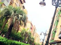 Zaragoza street with jelly palm tree royalty free stock photography