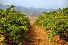 Zaragoza Vineyards Spain Stock Photography