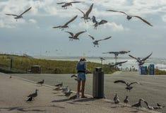 Zaraz seagulls Zdjęcie Royalty Free