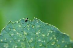 Zaraza insekta bardzo mały zakończenie up obrazy royalty free