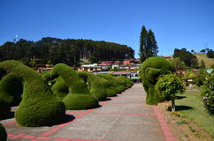 Zarcero公园在阿拉胡埃拉,哥斯达黎加 免版税库存照片