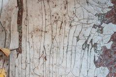 zardzewiała ściany ścienny błękit biel stary rusty metali obraz royalty free