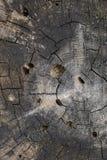 Zarobaczona drewniana tekstura Obrazy Stock