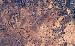Zarodniki, grzyb na barkentynie obraz stock
