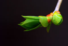 Zarte Grüneintragfäden. Stockbild