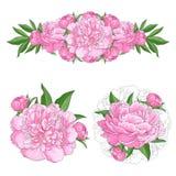 Zarte rosa Pfingstrosen stellten mit den Blütenblumenblumensträußen ein, die auf weißem Hintergrund lokalisiert wurden Stockfotos