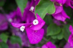 Zarte rosa Phalaenopsisorchidee auf unscharfem Hintergrund Weiche reizende Blumen werden in einer künstlerischen Zusammensetzung  stockfoto