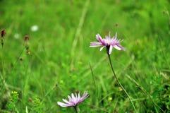 Zarte wilde Blumen, grünes Gras Stockbild