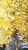Zarter goldener Herbst Stockbild