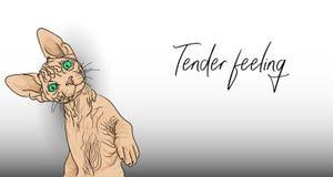 Zartes Gef?hl Lustige kahle Katze ist nicht gegen zarte Gefühle lizenzfreie abbildung