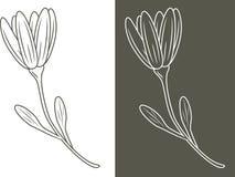 Zarysowany kwiat odizolowywający na białym i ciemnym tle zdjęcia royalty free