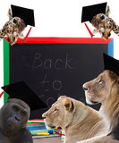 Zarząd szkoły i zwierzęta Zdjęcia Stock