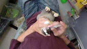 Zarządzać Enrofloxacin antybiotyka mały królik zbiory