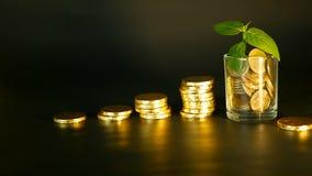 Zarządzanie wydajność Sterty złote monety blisko pełnego szkła i zieleń liścia flanca na czarnym tle sukces zbiory wideo