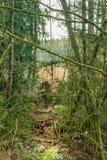 Zarza cubierta de musgo del bosque foto de archivo