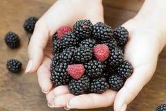 Zarzamora y fresa maduras en manos de la mujer Foto de archivo