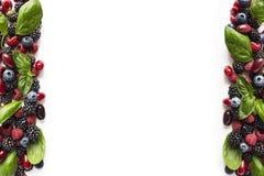 Zarzamoras, arándanos, frambuesas, cornels y hojas maduros de la albahaca en el fondo blanco Foto de archivo