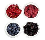 Zarzamoras, redcurrants, bayas azules y ra rojo Fotografía de archivo