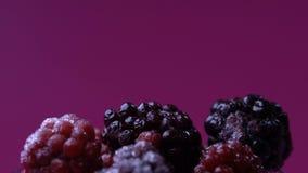 Zarzamoras y frambuesas de descongelación, antioxidante natural, vitaminas del verano almacen de video