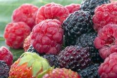 Zarzamoras y fresas frescas de las frambuesas Fotos de archivo