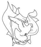 zasłony gołębi Obraz Royalty Free